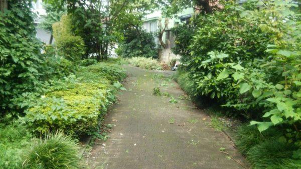 自分の庭のような隣の緑道