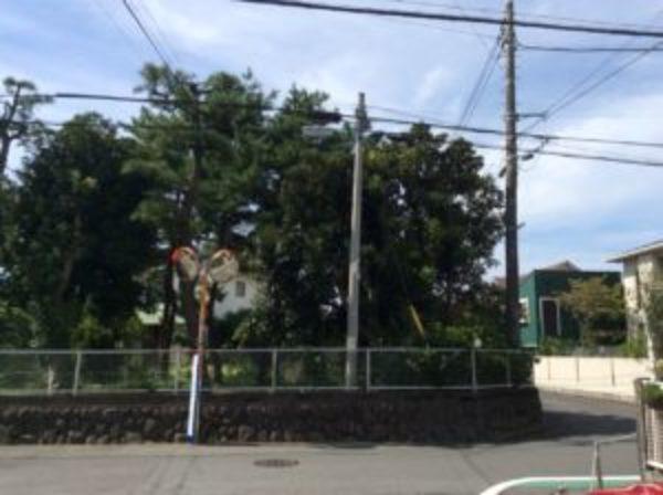 樹木の解体
