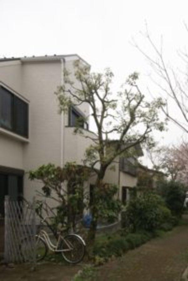 緑とロフトのある家ー桜の季節に完成